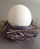 'The Way It Is' by Angela Edmonds, Sculpture, Bird's nest, bird's egg.